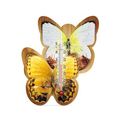 Бабочка марокко